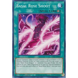 Basal Rose Shoot